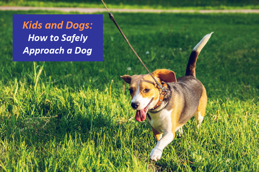 Kids and Dogs: How to Safely Approach a Dog